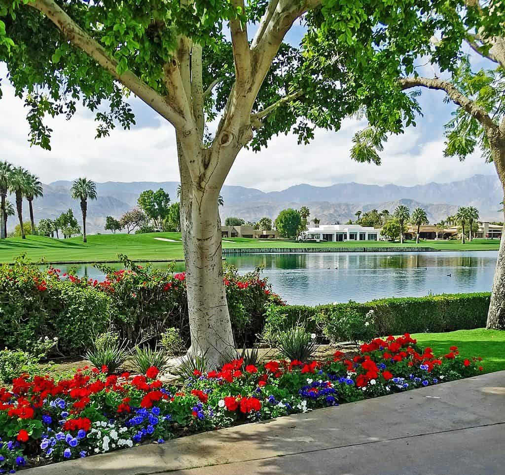 professional palm desert landscaping services water wise landscape